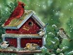 Bird Feed Store F1