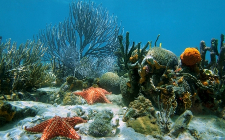 Starfish and Corals on Seabed - Starfish, Coral Reefs, Oceans, Seabed, Underwater, Nature
