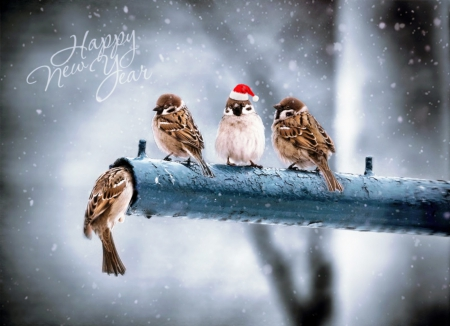 Happy New Year ! - cute, birds, sparrows, new, year, pole, happy