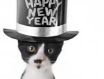 Happy New Year to Carmen and the famous duo Pasha and Picasso