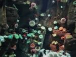 Ripleys Aquarium Toronto On