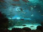 Ripleys Aquarium Toronto ,on