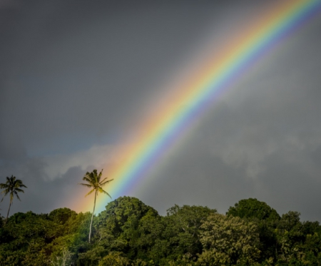 Rainbow - Wood, Tropical, Rainbow, Tree