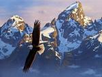 Bald Eagle in Grand Tetons