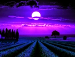 MOONLIGHT LAVENDER