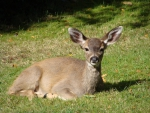 Siesta, on the  front lawn;; Comox,B.C.