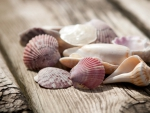 Shells and Clams
