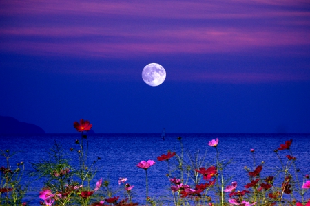 FULL MOON - moon, flowers, lake, night, fullmoon