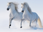 Galloping thru the snow