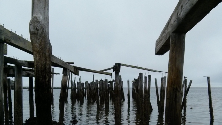 Dead Trees at Low Tide, I - pier, provincetown, atlantic, ocean, cape cod