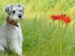 Posing with red flowers