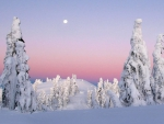 Full moon over frozen nature