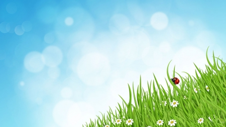 Ladybug in Grass - flowers, spring, grass, bokeh, sky, ladybug, lady bug, daisies, summer