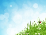 Ladybug in Grass