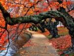 Trees over Autumn Lake