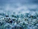 Frozen grass maco