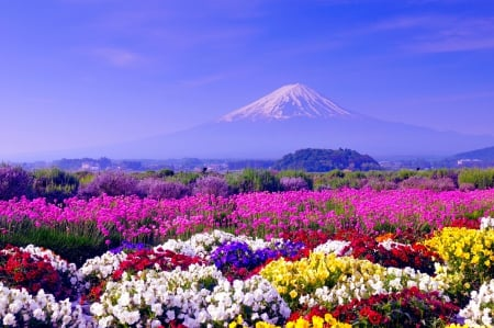 Spring in japan fields nature background wallpapers on desktop spring in japan mountain japan flowers spring fuji field mightylinksfo
