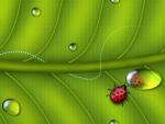 Ladybug Reflection