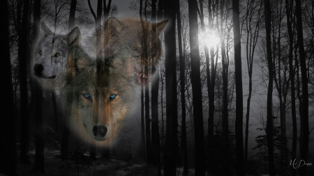 Wolves in Deep Forest - Forests & Nature Background ...