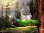 Bird in Flight in Forest