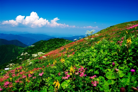 MOUNTAIN GLORY - mountain, flowers, nature, spring
