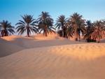 Sahara Desert Palms