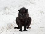 Wolf Yoga
