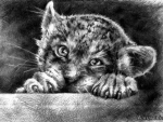 Little Big Cat