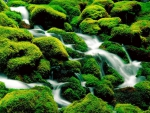 Mossy Rocky Stream
