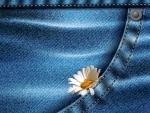 Daisy in My Pocket