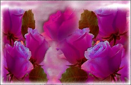 Agrupadas - color, vista, flor, pasion