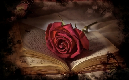 romantic story - butterfly, romantic, rose, book, story