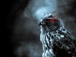 Τhe glance of the hawk