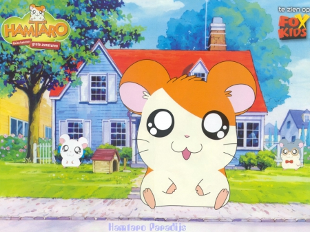 Hamtaro - Hamster, Anime, Cartoon, Hamtaro