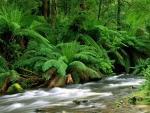 yarra ranges national park australia