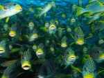 Great Barrier Reef _butterfly fish