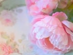 ╭♥╯With Pastel Peonies╭♥╯