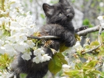 kitty on the flowering branch