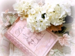 ╭♥╯Book of Love╭♥╯