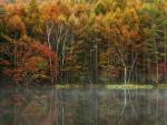 * Autumn forest *