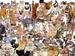 Cat Montage