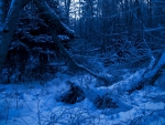 ~Twilight in the snowy woods~