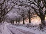 Tree-Lined Street in Winter