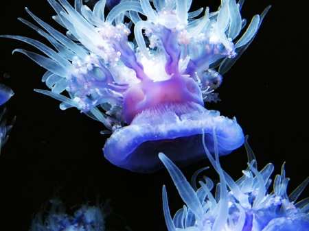 Brightly-Colored Neon Jellyfish - sea life, underwater, nature, jellyfish