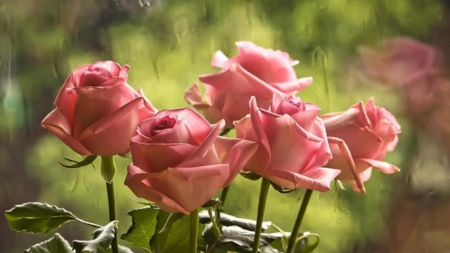 Five Pink Roses - drops, roses, five, glass, leaves, love, nature, rain, pink