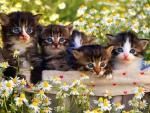 kittens among daisies
