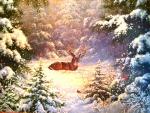 ★Deer in the Snow★