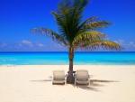 Beach Chairs and Palm Tree on a Cancun Beach