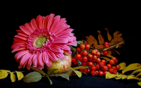 Pink Gerbera and Berries - still life, berries, gerbera, flowers, nature, pink