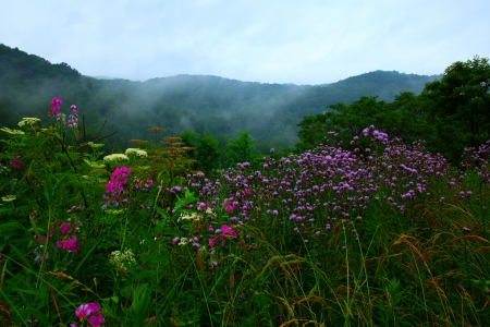 Mountain Wildflowers in the Mist - mountains, wildflowers, flowers, nature, mists